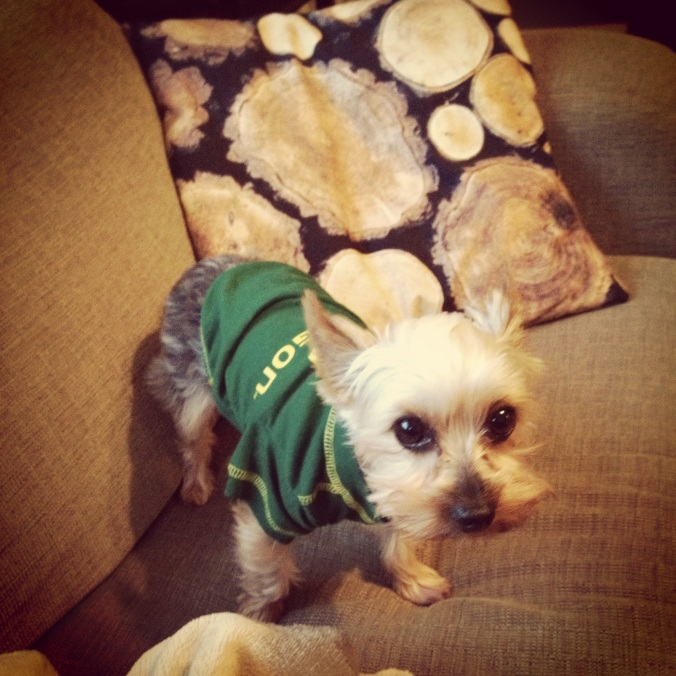 The only thing Hammy likes more than wearing sweaters is sporting the green and yellow! Go Ducks!