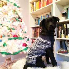 Osa rocks her Christmas sweater! I can't wait to see how much she loves watching people tear into giftwrap!